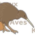 マオリ族の神話に泣いた!ニュージーランドの飛べない鳥キーウィ