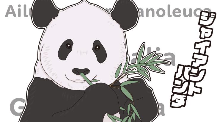 ジャイアントパンダのイラスト