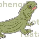 第三の眼を持つ恐竜の末裔!ムカシトカゲは今も生きています