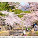 【2020年3月25日追記】場所取りの裏技も教えます!桜の名所・夙川河川敷緑地(夙川公園)のお花見情報と3つの楽しみ方