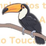 オニオオハシのクチバシはステゴサウルス!?ペットとしても飼えるアマゾンの宝石