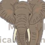 陸上最大で最強!?アフリカゾウの鼻の万能さとマンモスとの関係