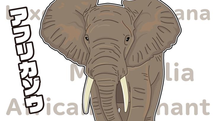 アフリカゾウのイラスト