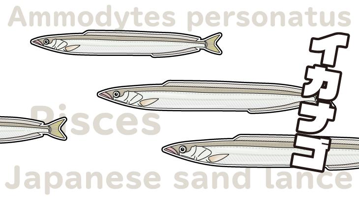 瀬戸内の春告魚イカナゴは夏を寝て過ごす