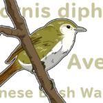 ウグイスは美しい鳴き声で春を告げる!メジロとの違いも解説